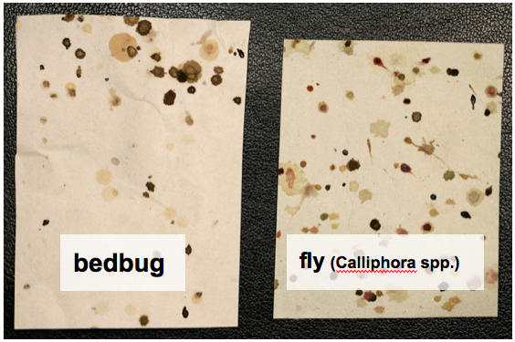 Screen Shot 2012 12 21 At 17.59.05. Bites. Bedbugs ...