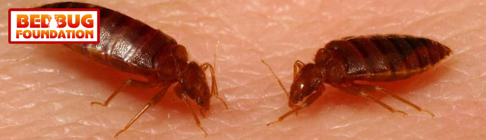 The Bed Bug Foundation